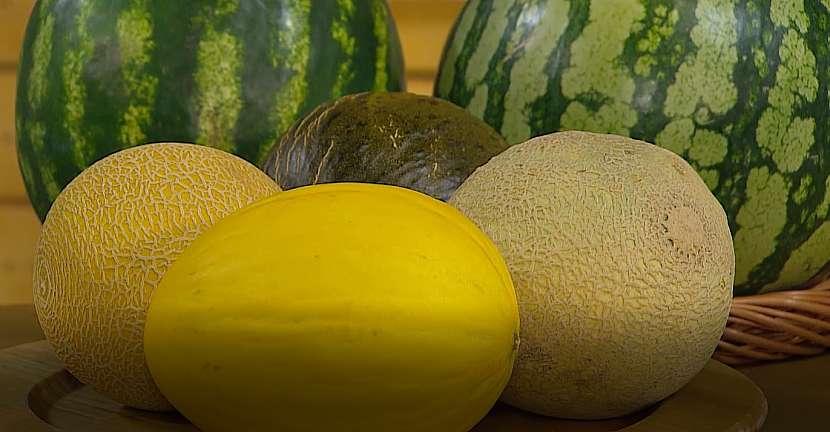 Mezi melouny si můžete vybrat ten pravý