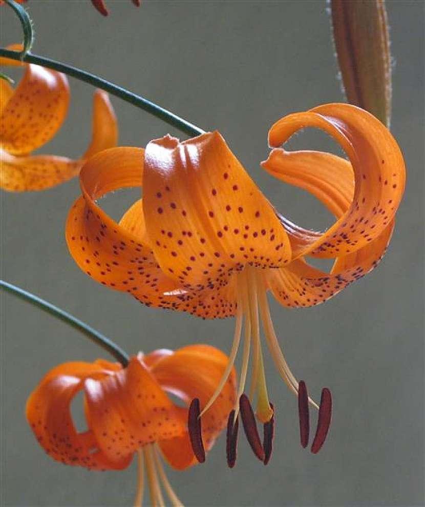 Vydejte se za vůní květin a bylinek
