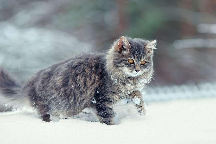 Kočka si v zimě