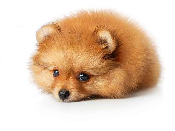 Podzim ve znamení línání psů (Zdroj: Depositphotos (https://cz.depositphotos.com))