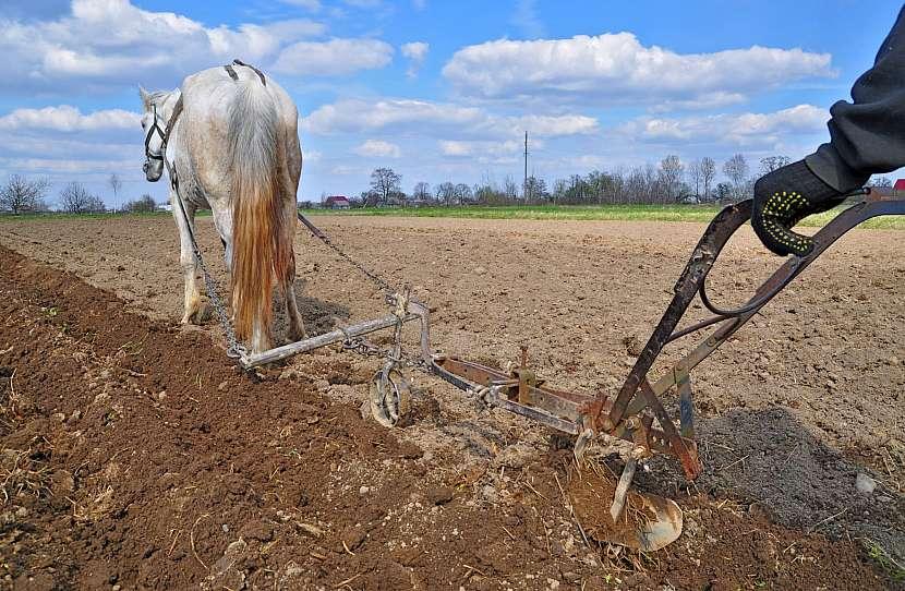 Orání s koněm a pluhem