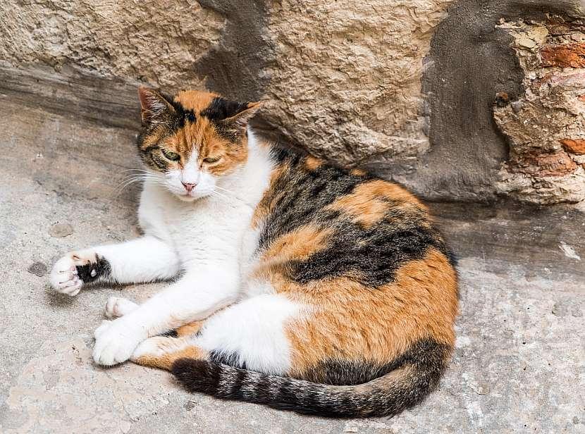Kočka v nesnázích
