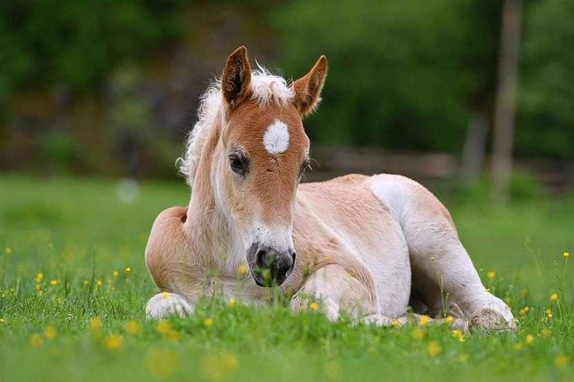 Jarní výlety za zvířátky se budou líbit nejen dětem
