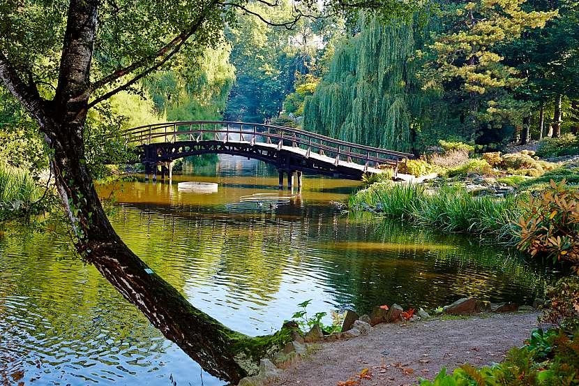 Jezero, most, strom