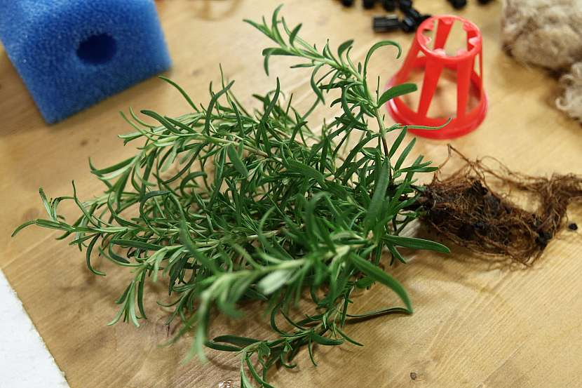 Pomocí akvaponie můžeme pěstovat bylinky do kuchyně