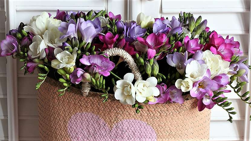 Aby kytice vydržela dlouho krásná: voňavé květy frézie (Freesia)