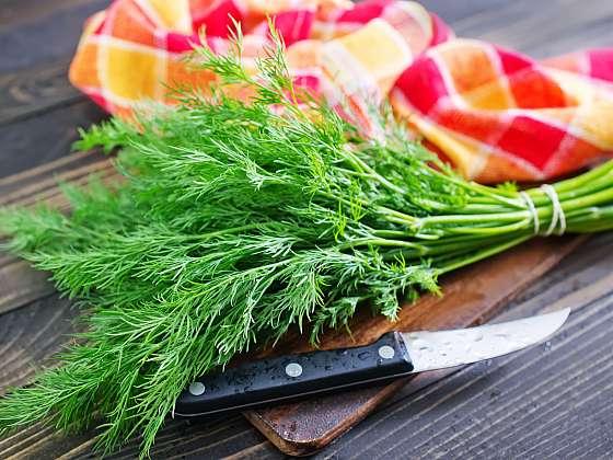 Kopr je aromatická bylina hojně využívaná především do omáček a salátů (Zdroj: Depositphotos)