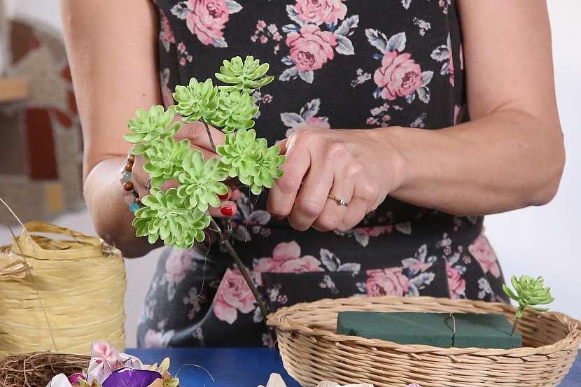 Zapichování rostlin