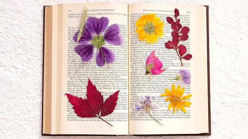 Nápady na dekorace z přírodnin: lisovat rostliny a jejich části lze ve speciálním lisu, ale také jednoduše v knížce