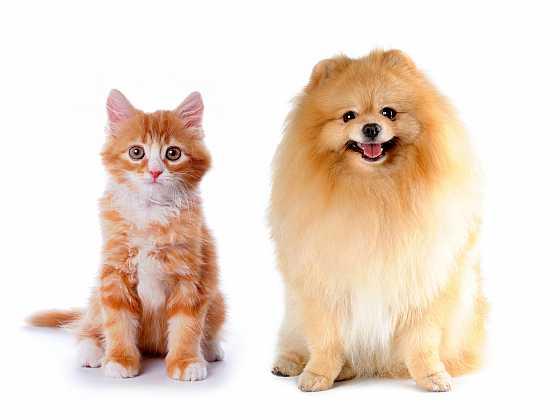 Kastrace koček a psů se nemusíte obávat   (Zdroj: Depositphotos)