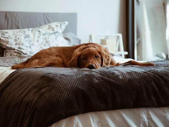 Mají vaši domácí mazlíčci svůj pelíšek nebo vám zabírají místo v posteli? (Zdroj: UNSPLASH/ KRMIVA PUČÁLKA)