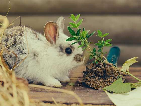 Jak se starat o králíka (Zdroj: Depositphotos)