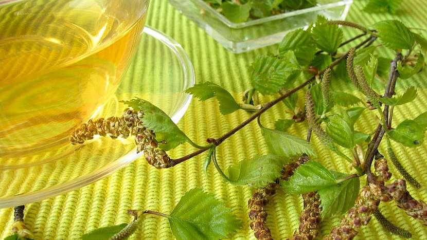Bříza bělokorá: z čerstvých listů se připravuje březová koupel