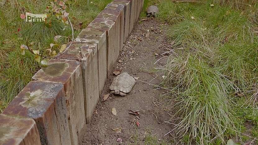 Venkovní želvy