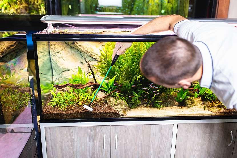 Škrabkou důkladně odstraňte řasy ze stěn akvária