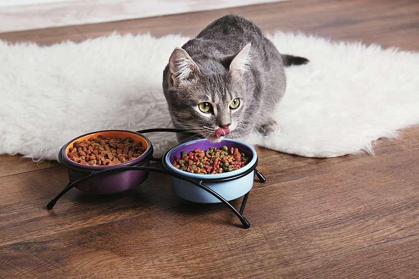 Kočičí granule