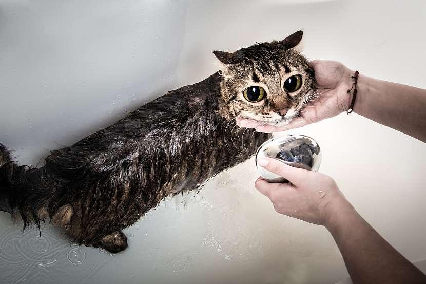 Smutná kočka s velkýma očima ve vaně