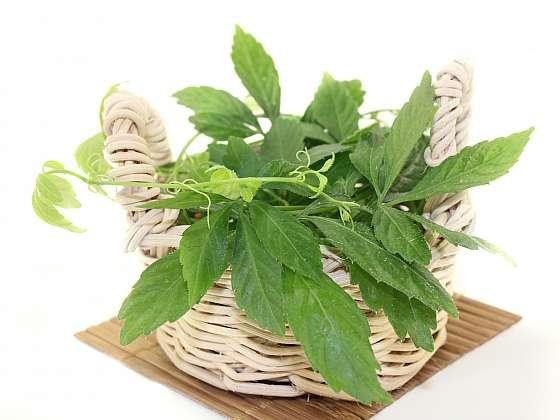 Ženšen pětilistý je rostlinka vhodná do každé lékárničky, poradí si se spoustou neduhů (Zdroj: Depositphotos)