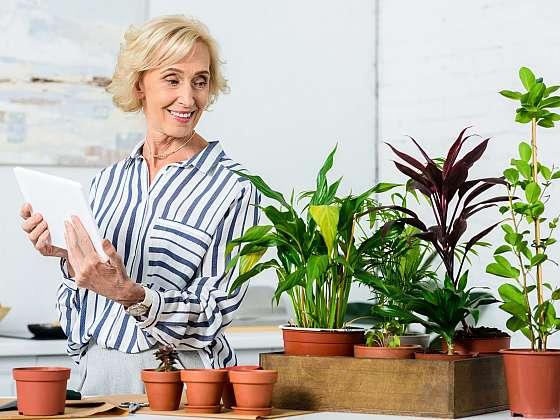 Pokojové rostliny nemusí být pouze pro okrasu, mohou také léčit. Pojďte se s námi podívat, jakými rostlinami byste si mohli rozšířit svou domácí lékárnu (Zdroj: Depositphotos (https://cz.depositphotos.com))