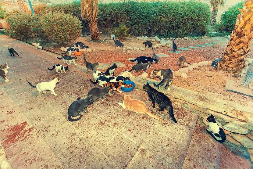 Hodně koček