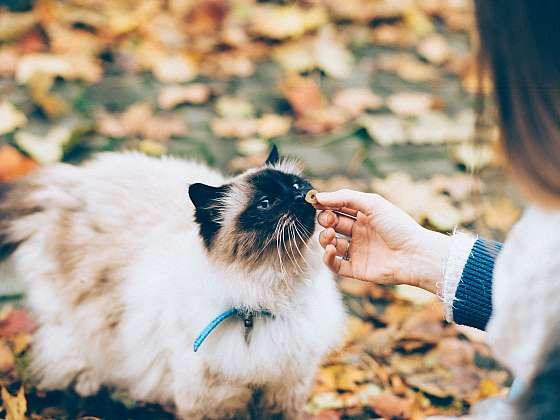 5 tipů, jak na kočičího mlsouna (Zdroj: Vanilla PR)