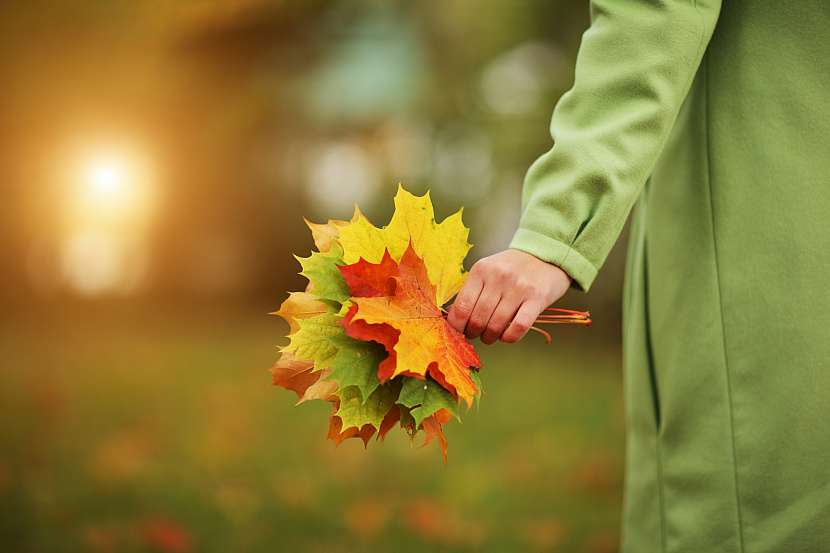 Nasbírejte si domů barevné podzimní listí a rozzařte si byt barvami podzimu