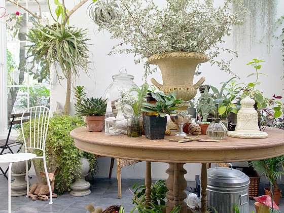 K nábytku inspirovanému exotickými kraji se hodí rostliny s bohatým listovím (Zdroj: Depositphotos (https://cz.depositphotos.com))
