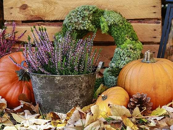 Vřesy se v podzimních truhlíkách skvěle vyjímají (Zdroj: Depositphotos (https://cz.depositphotos.com))