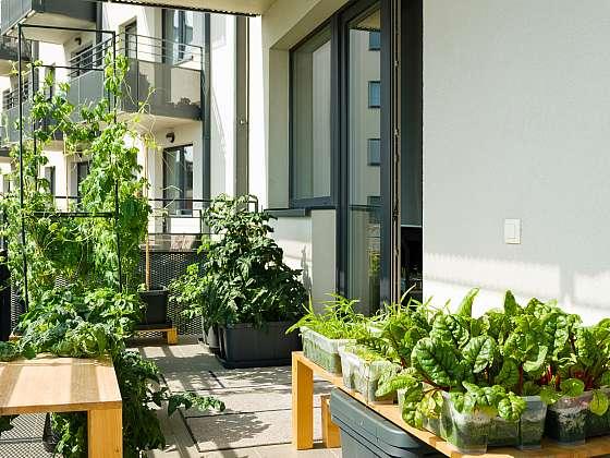 I malý balkon můžete proměnit v magickou zahradu, která vám bude přinášet radost v podobě bohaté úrody (Zdroj: Depositphotos)