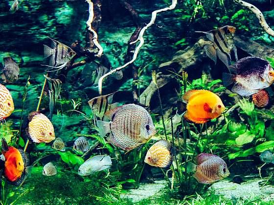 Při správném a pravidelném čištění akvária se výměna vody dobře podepíše na zdraví rybek (Zdroj: Depositphotos (https://cz.depositphotos.com))