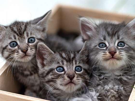 Očkováním chráníte koťata před nebezpečnými nemocemi (Zdroj: Depositphotos (https://cz.depositphotos.com))