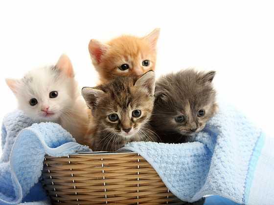 Co dělat, když náš domov ovládnou koťata (Zdroj: Depositphotos)