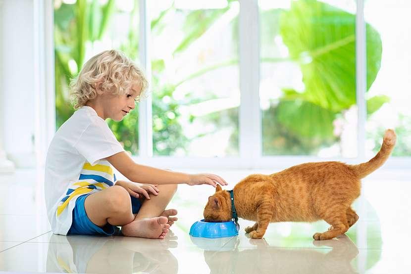 Kočka s miskou