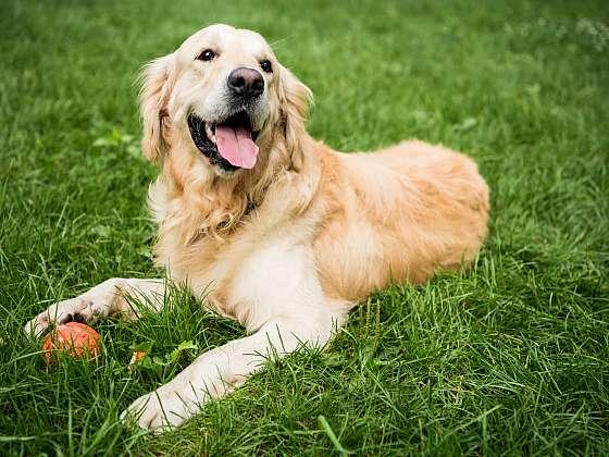 V čem jsou osiny trav a sametky nebezpečné pro naše psy? (Zdroj: Depositphotos (https://cz.depositphotos.com))