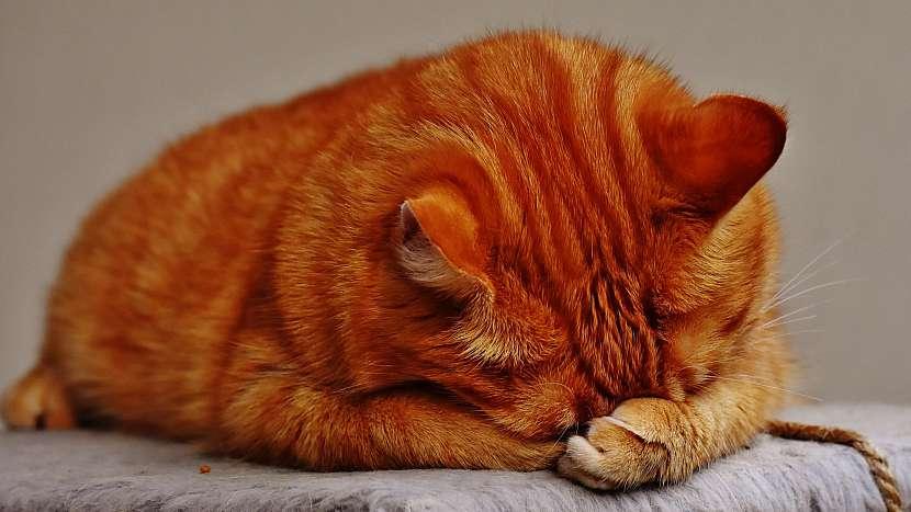 Občasné zvracení u kočky je celkem běžná záležitost, čistí si tím žaludek od nestrávených granulí nebo spolknutých chlupů