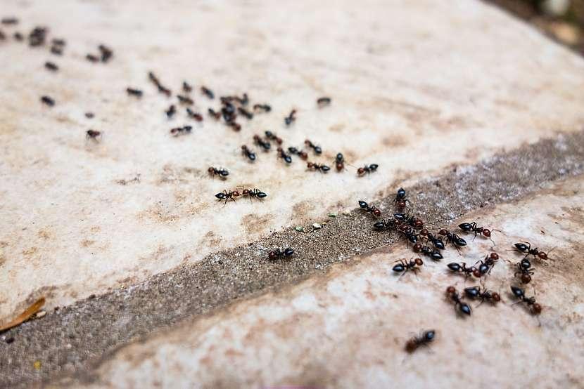 Mravenci na dlažbě