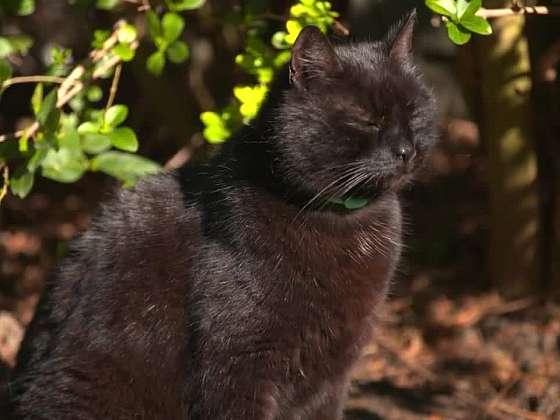 Údržba srsti a drápků kočičích krasavic a krasavců (Zdroj: Prima DOMA)
