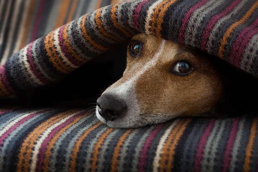 Bázlivý pes