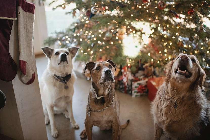 Unspalsh_Vánoce