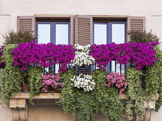 Rozkvetlé letní balkony lákají svou záplavou pestrých květů (Zdroj: Depositphotos)