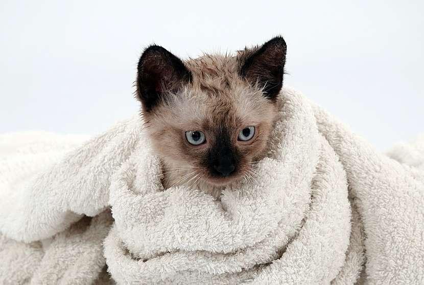 Kočka v ručníku