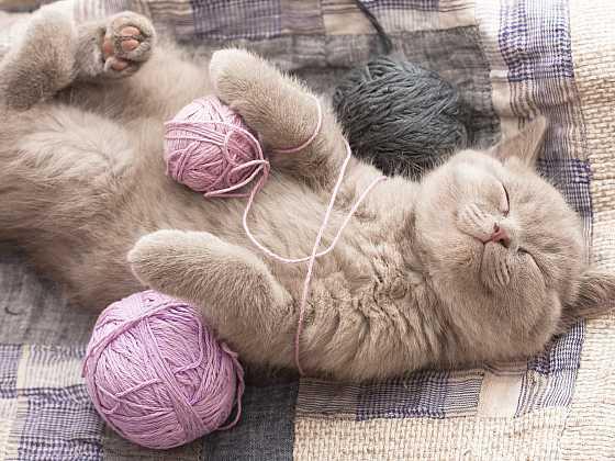 Kočka je masožravec. Víte, čím ji krmíte? (Zdroj: Depositphotos)
