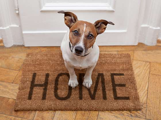 Necháváte často doma psa samotného? (Zdroj: Depositphotos)