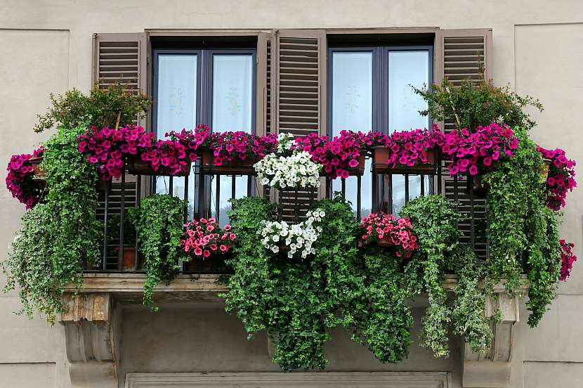 Balkon s rostlinami