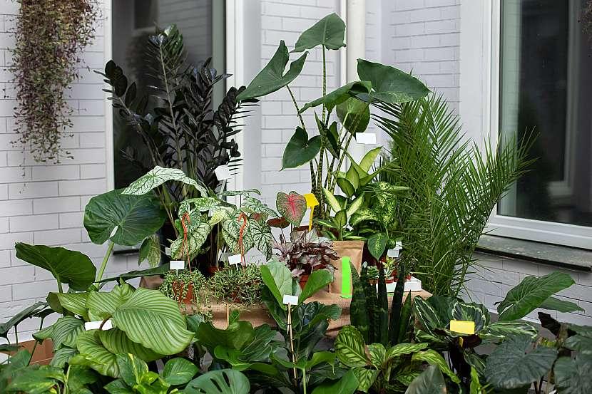 Pokojové rostliny na terase