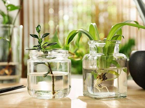 Vodní zahrada může být pro váš interiér příjemným osvěžením (Zdroj: Depositphotos (https://cz.depositphotos.com))