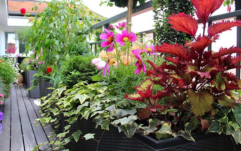 Rostliny na terase