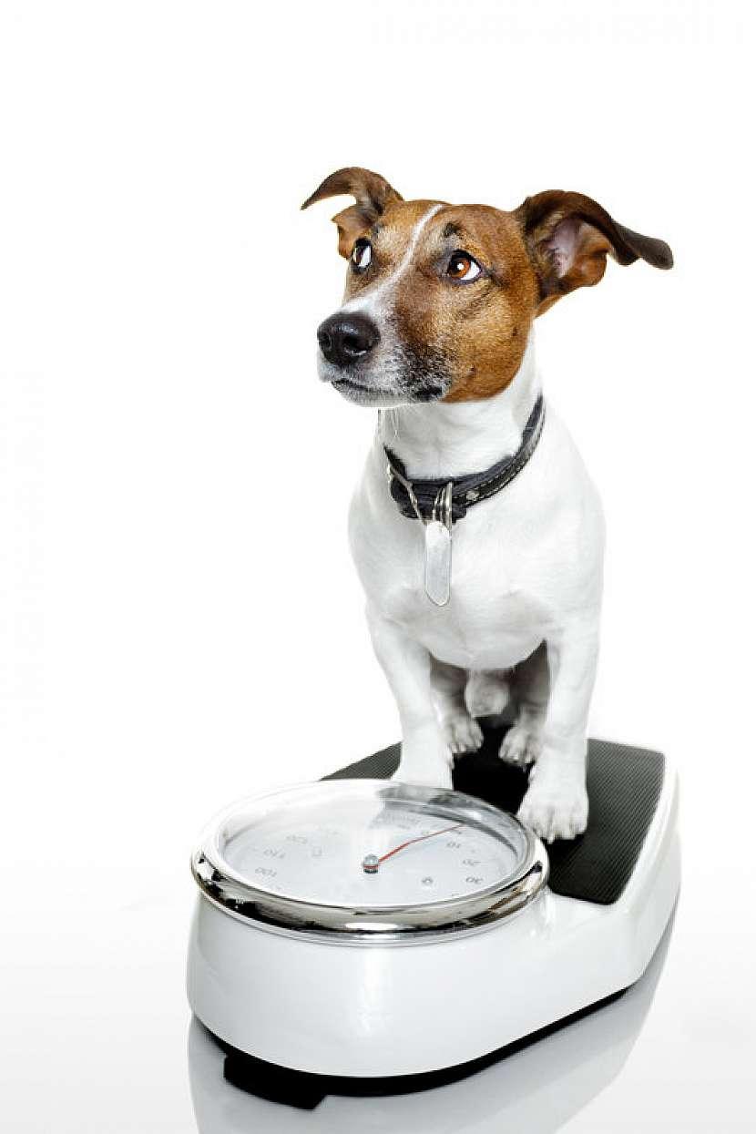 Váha psa