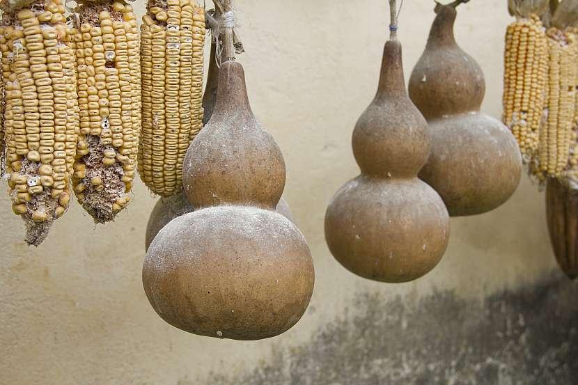 Plody indické okurky