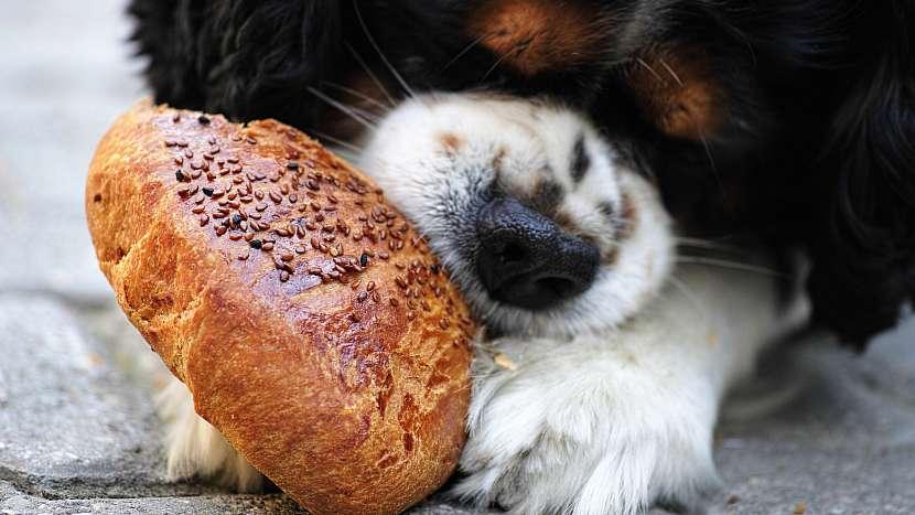Šťastný pes: základním tabu je krmení psa jídlem od stolu
